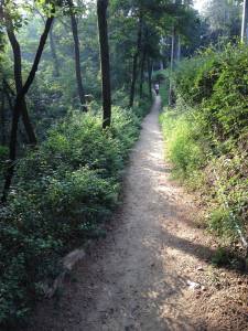 photo of walking path on Sky Way